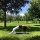 Yoga im Park am Weyerfeld in St. Veit an der Glan mit Yogatrainerin MiaNamaste.
